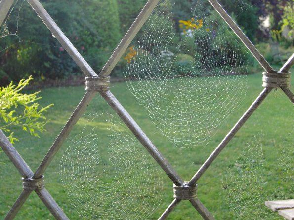Sektorspinne, besondere Spinnennetze
