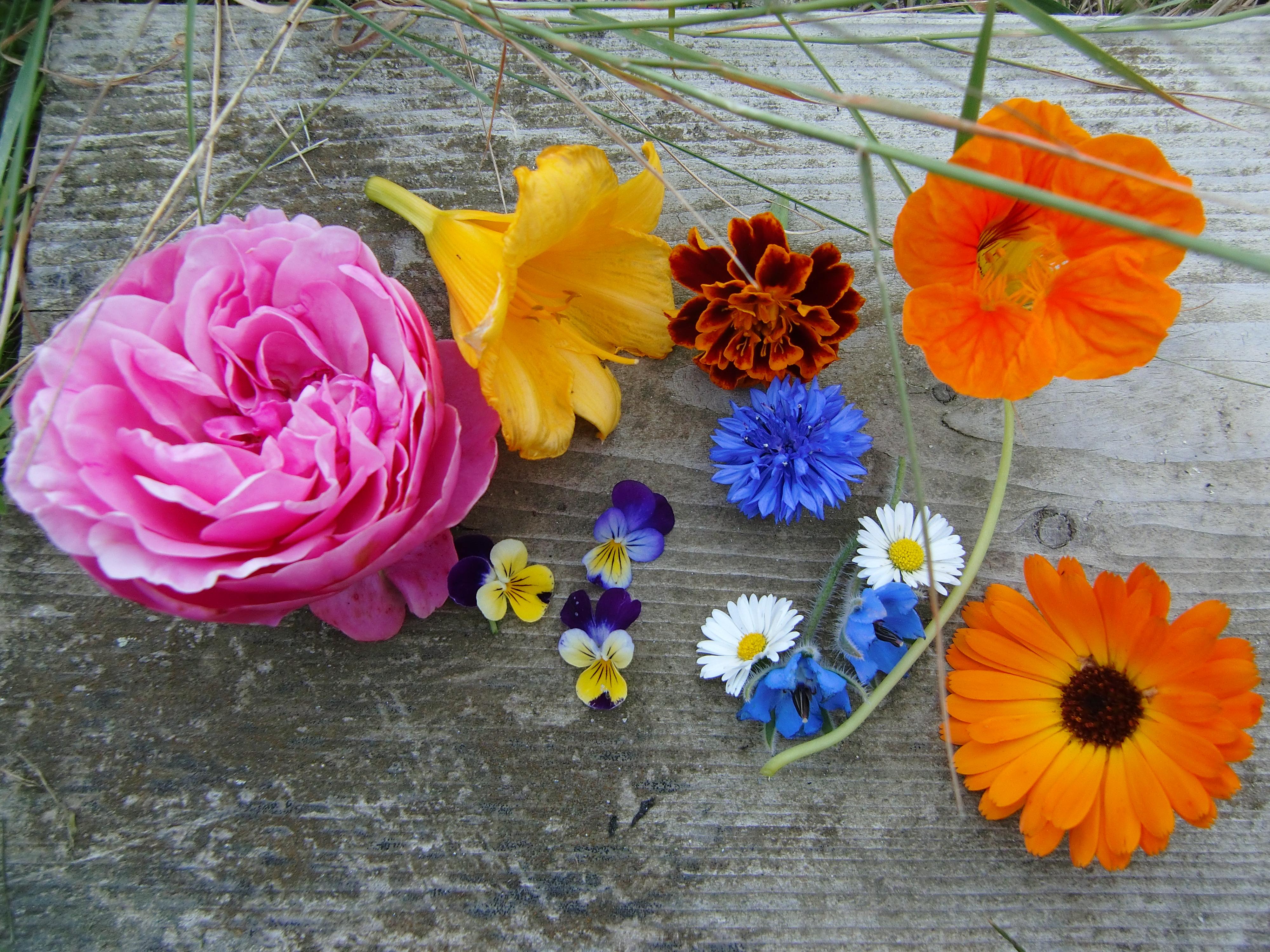 Rose, Taglilie, Hemerocallis, Studentenblume, Tagetes, Kapuzinerkresse, Ringelblume, Borretsch, Gänseblümchen, Hornveilchen, Kornblume