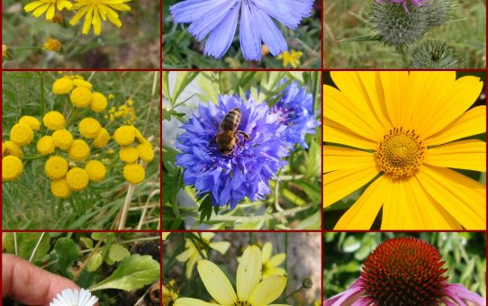 Körbeweise Blüten