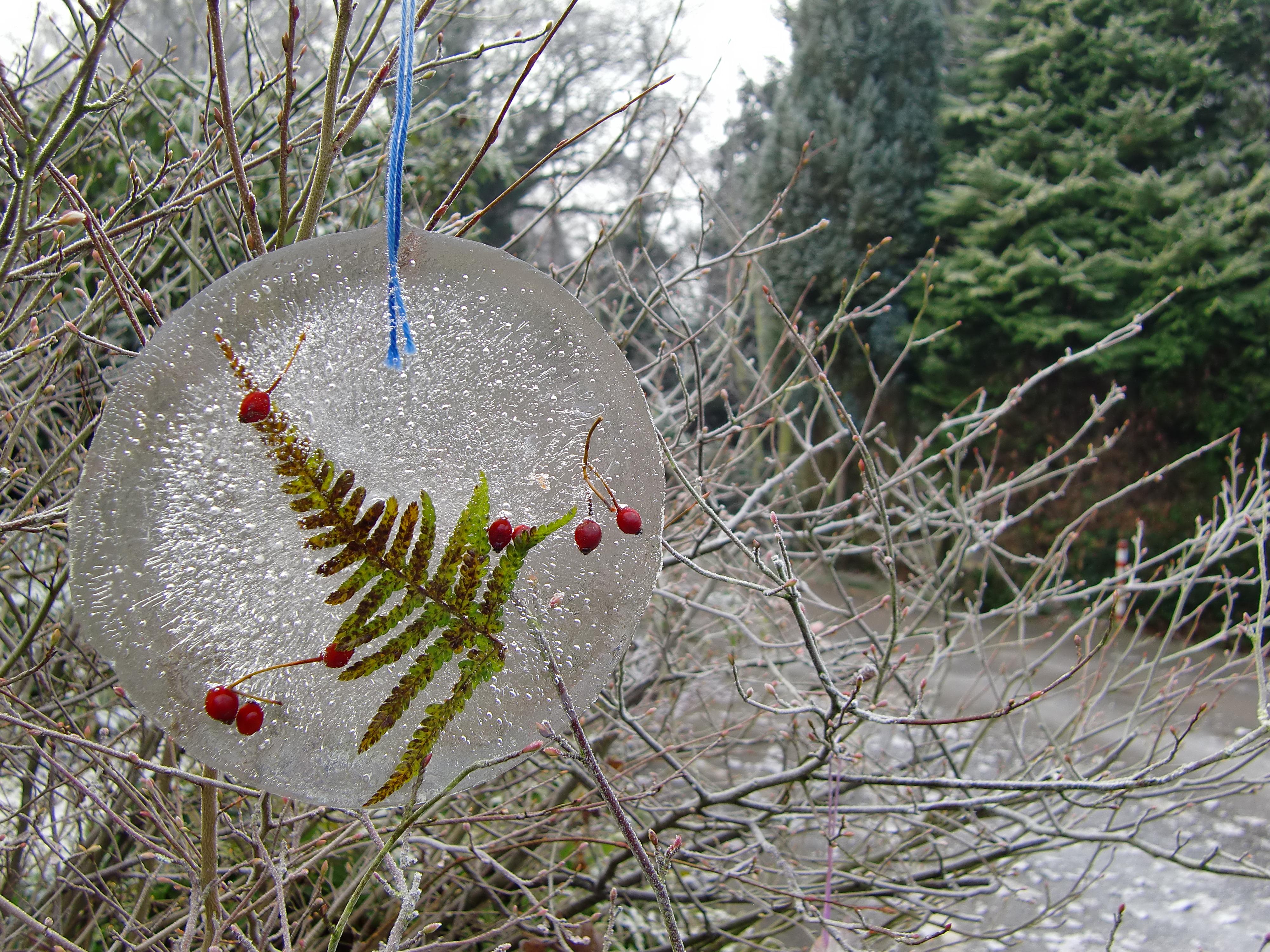 Farn und Hagebutten in Eis gegossen