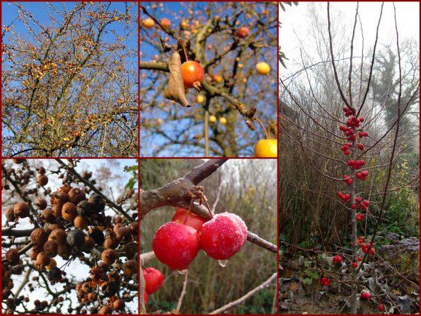 Zauberhafte Zieräpfel, mal in Gelb, mal in Orange, und der Schönste in Rot