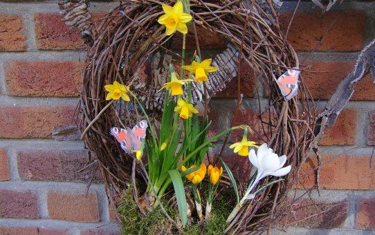 Frühling bekränzen - Deko mit Blumenzwiebeln