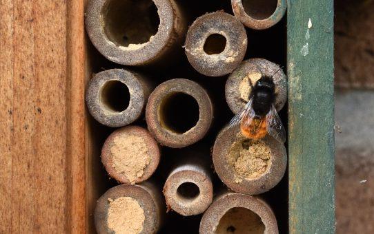 Wilde Bienen oder was?