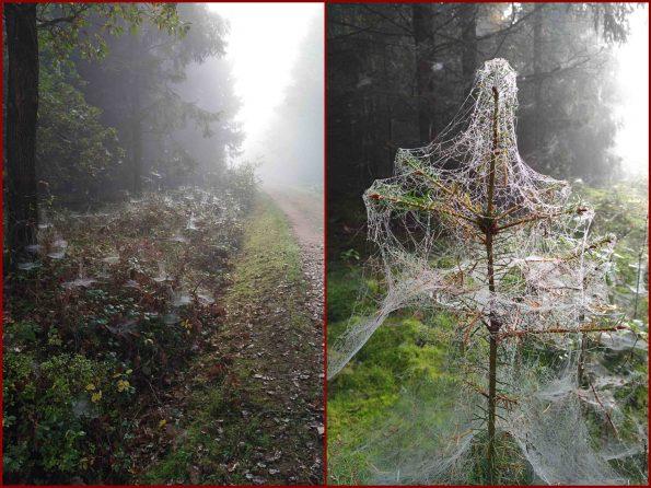 Nebel im Herbstwald, Spinnenweben im Nebel, Netze im Nebel