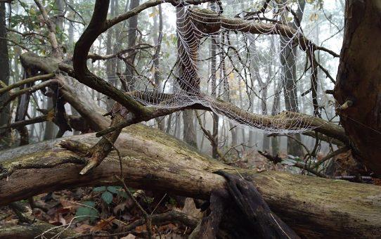 Gewebter Herbst, Netze im Nebel