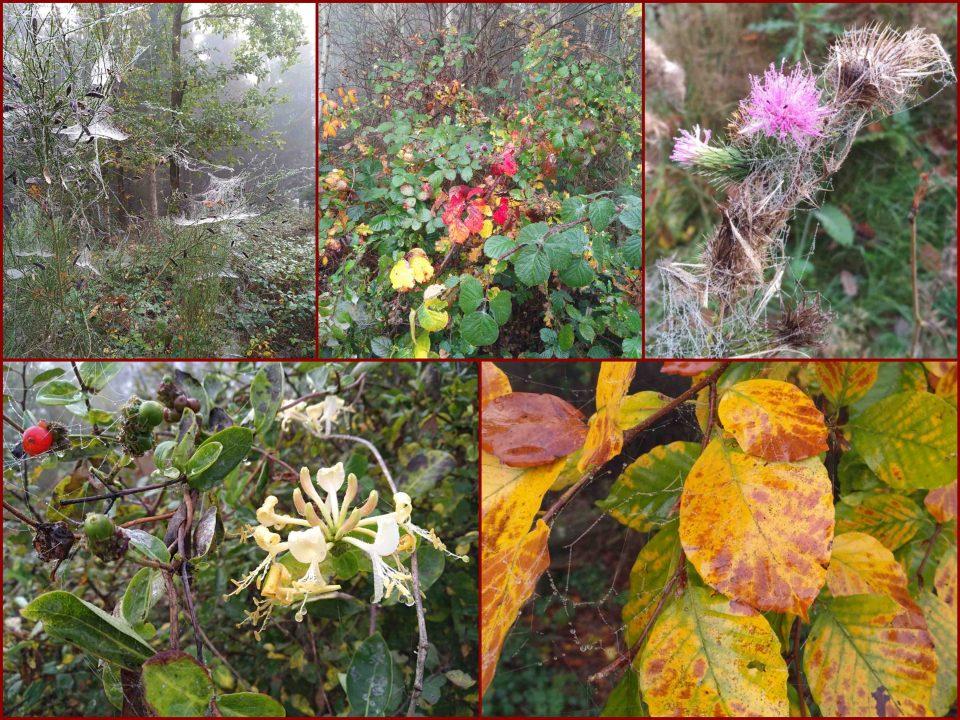 Spinnennetz im Nebel, Nebel im Herbstwald