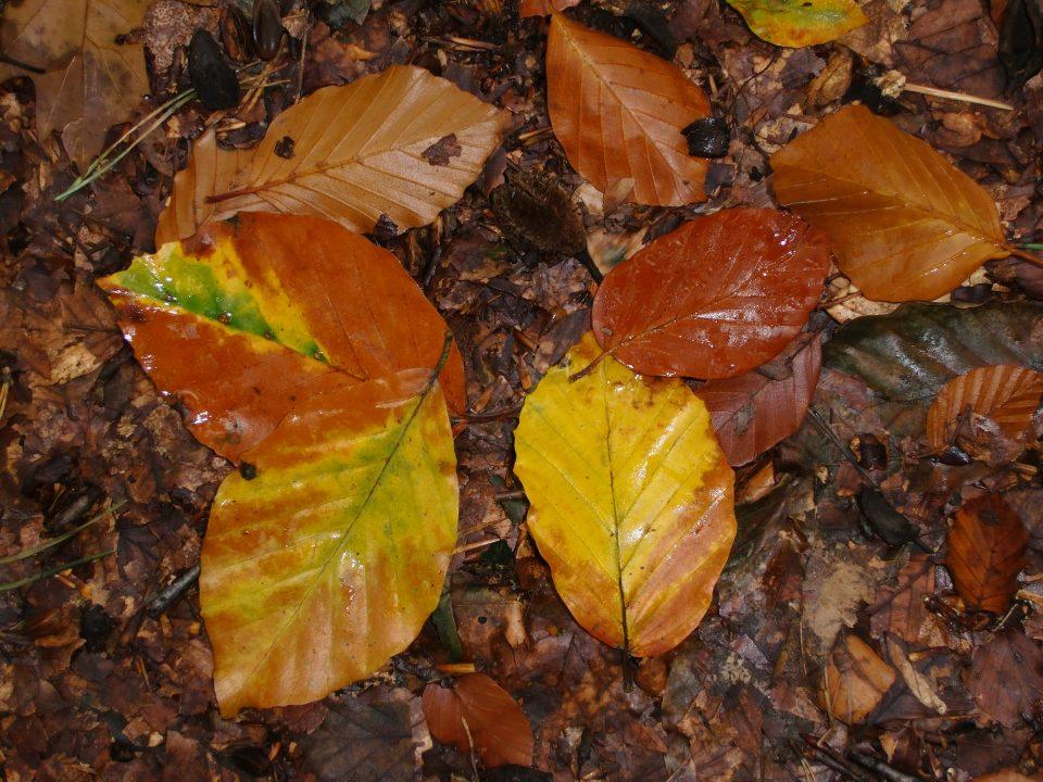 Herbstfärbung mit Grün