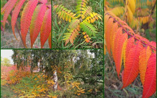 Wunderbare Herbstfärbung!