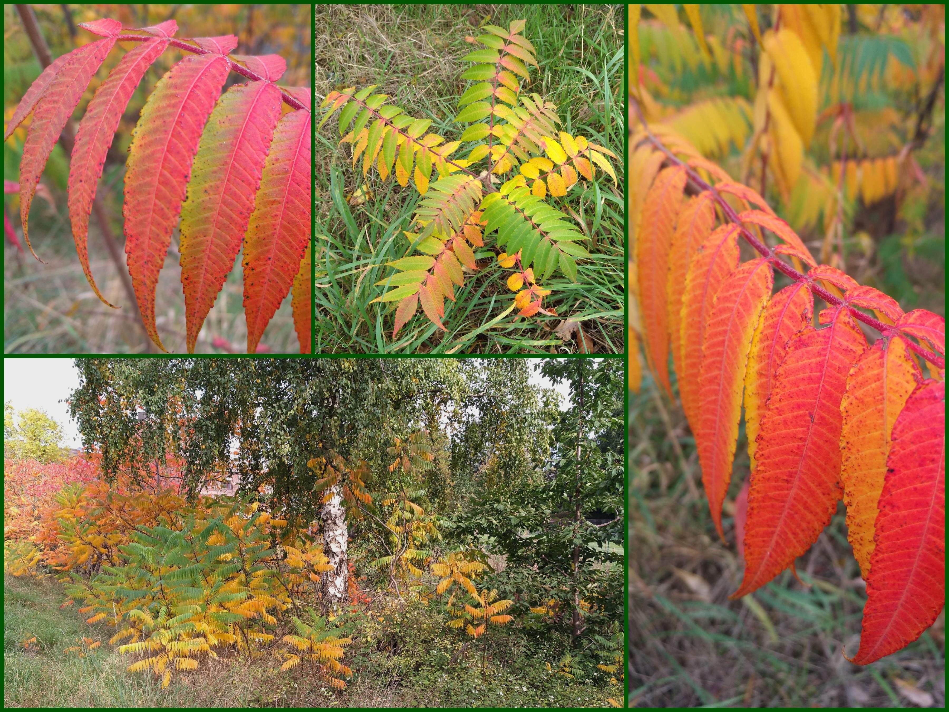 warum werden Blätter im Herbst bunt