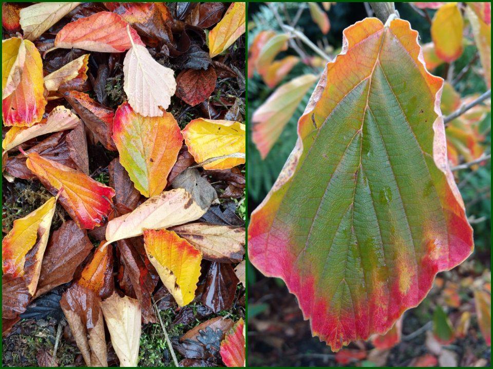 Warum färben sich die Blätter im Herbst