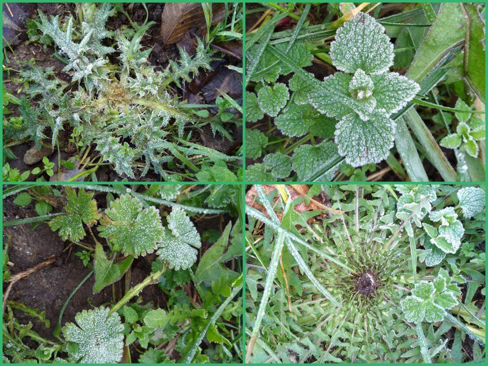 Pflanzen am Wegrand im Januar