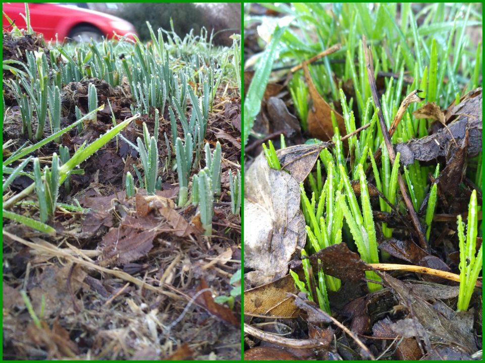 Blüten am Wegrand im Januar
