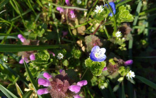 Blüten im März: Es wird bunt