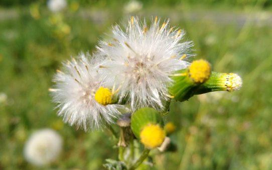 Blüten im April: Von zart bis beherrschend