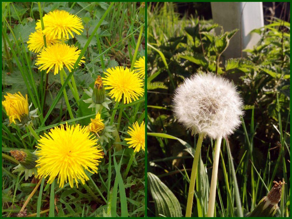 Blüten im April