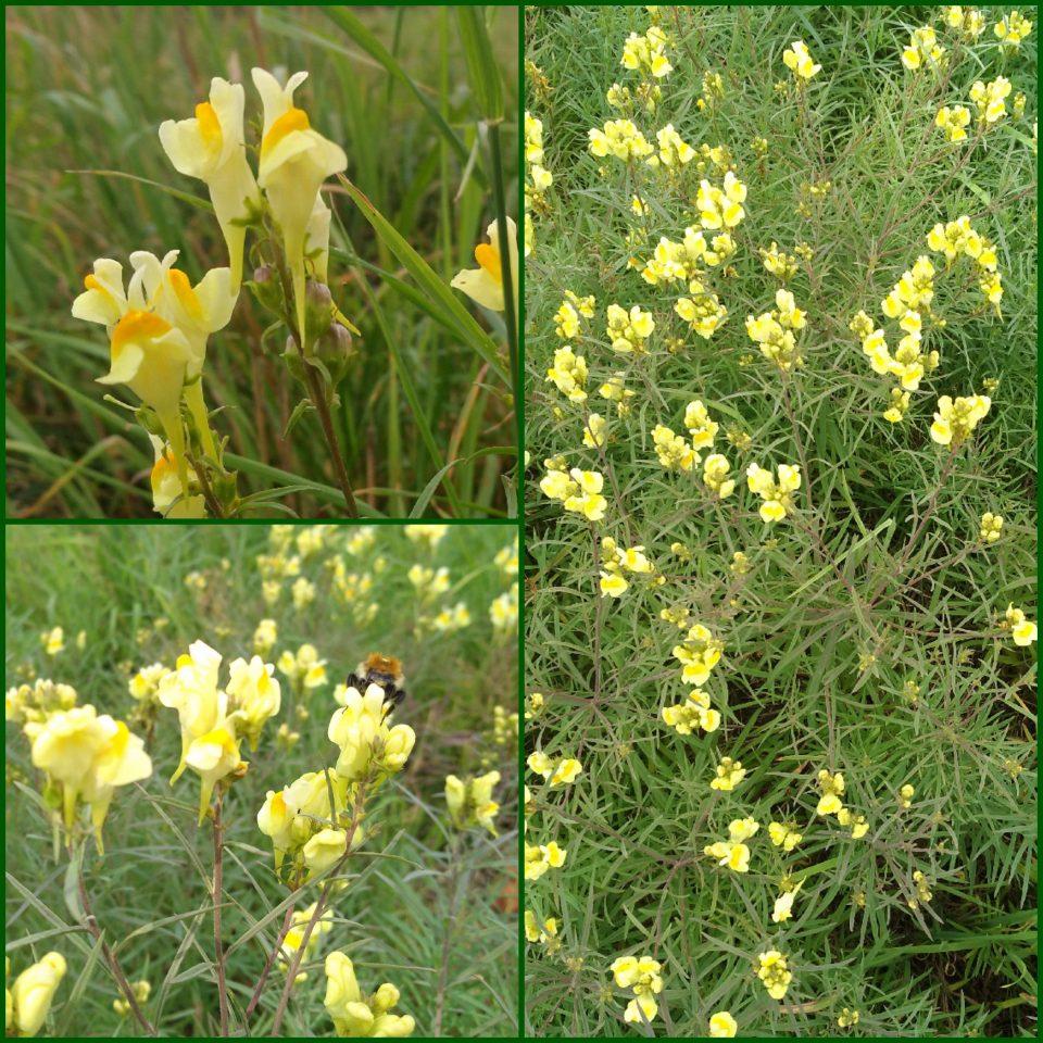 Blüten im Wegrand im Juli