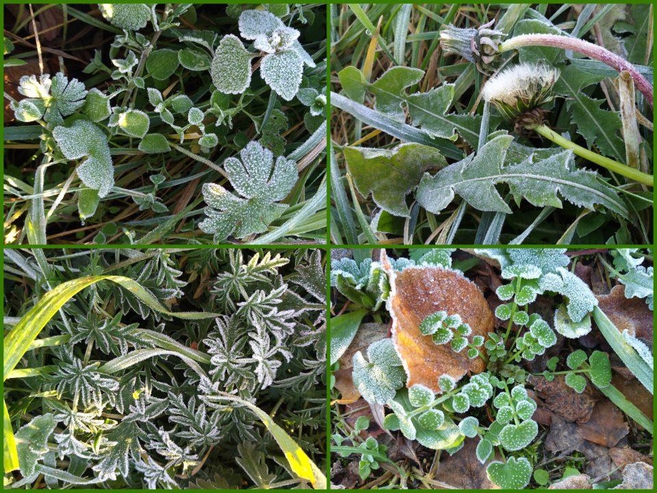 frostige Blätter im Dezember