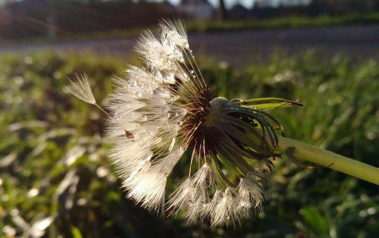 Blüten im Dezember - gibt's das?