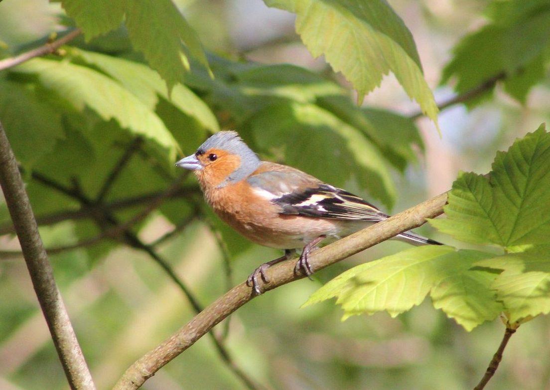Welche Vögel singen im Frühling