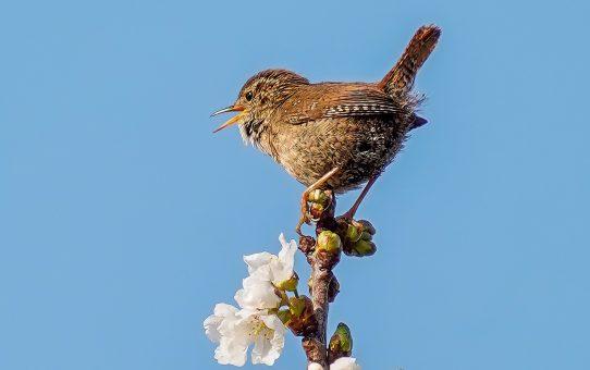 Noch mehr Vögel singen!